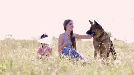 large breed dog : training German shepherds in nature z Stock Footage