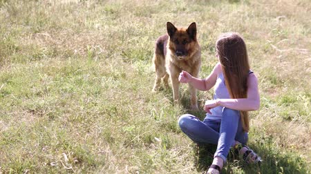 itaat : dog German Shepherd female schools Stok Video