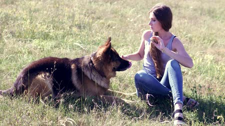 animal adoption : dog German Shepherd female schools Stock Footage