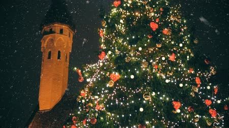 балтийский : Christmas tree at the Town Hall Square.