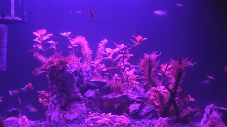экзотичность : Video of aquarium with changing lights at night.