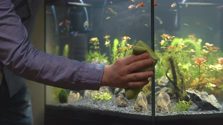 polished : Male hand cleaning aquarium using microfiber towel.