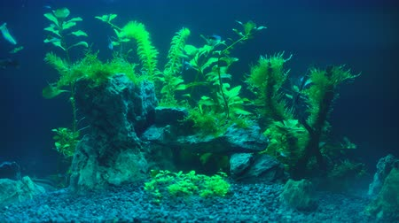 waterplant : Video van aquarium met planten 's avonds.