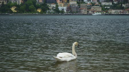Brunate mountain view from the Como lake. Stock Footage