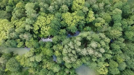 lesser : Aerial view: Overgrown river among green trees Stock Footage