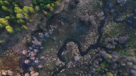 small height : Flying over a small and winding river in the forest on a spring day, a view from a height Stock Footage