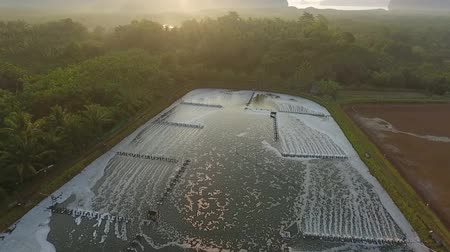 brine shrimp : Aerial: Shrimp and Prawn Farm Pool. Phang Nga, Thailand. HD Slowmotion. Stock Footage