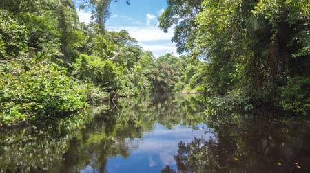 floresta tropical : Moving through the channel on the Black River, Costa Rica Stock Footage