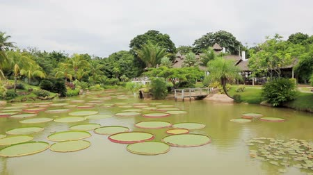 amazonka : Tropical garden with pond and Victoria Regia, Bolivia