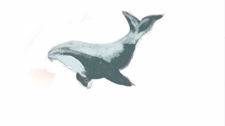 killer whale : Digital drawing. We draw a killer whale.