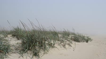 repousante : The beach in fog and dunes.
