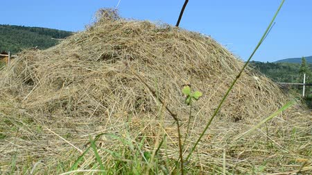packing hay : Haystack and mountains Stock Footage