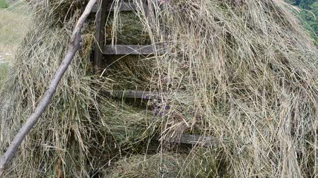 packing hay : Hay on a meadow