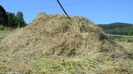 hay pile : Hay on a meadow