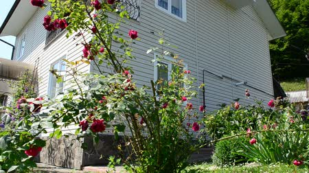 arrabaldes : Roses and house