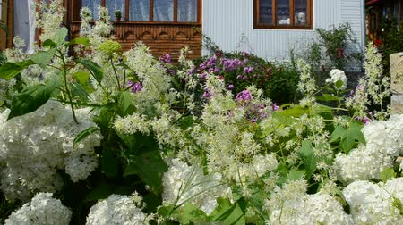 фронт : Flowers in front of the house, summer Стоковые видеозаписи
