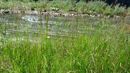 wilds : Grass against the mountain river