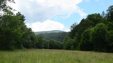 wood glade : Meadow and mountains