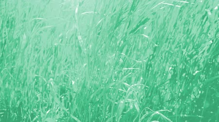 verdant : Grass in the field