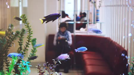 lobi : Beautiful aquarium in dental clinic. An aquarium instead of a wall and a background. Stok Video