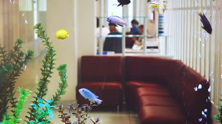 lobby : Beautiful aquarium in dental clinic. An aquarium instead of a wall and a background. Stock Footage