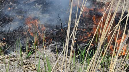 prairie : Fire in the field