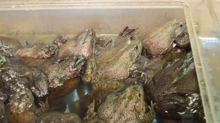 kétéltű : Frogs in the market of New York. The market in Chaina Town, New York. Stock mozgókép