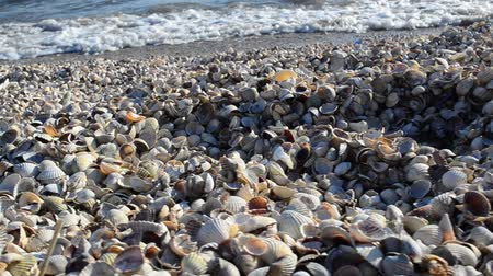 laguna : Cockleshells and sea