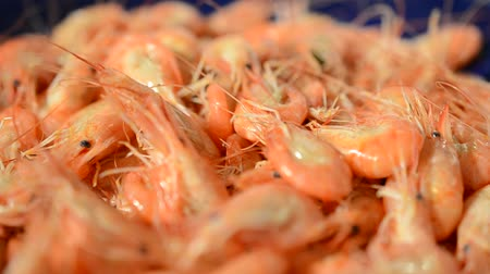 стартер : Boiled shrimp
