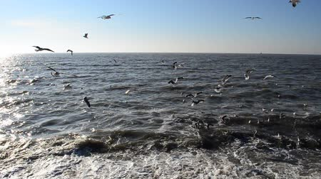 horizont : Sea and seagulls Stock mozgókép