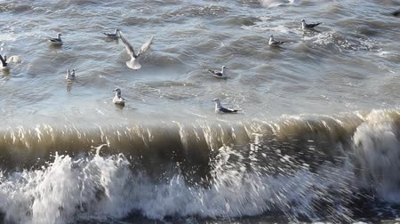 clareza : Wave and seagulls Stock Footage