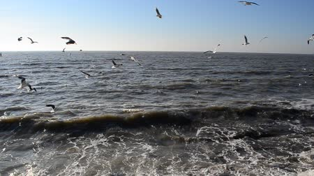 fly fishing : Seagulls in the sky Stock Footage