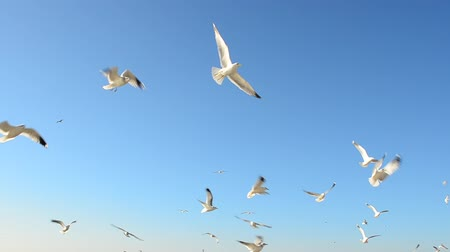 palmo : Seagulls against the sky