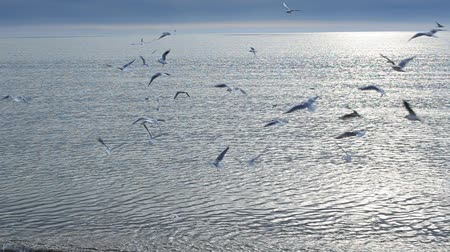 flying sea gull : Seagulls and sea