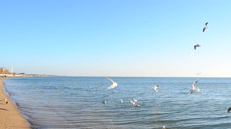 spaces : lot of seagulls over the sea