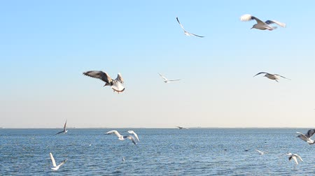 bird ecology : lot of seagulls over the sea