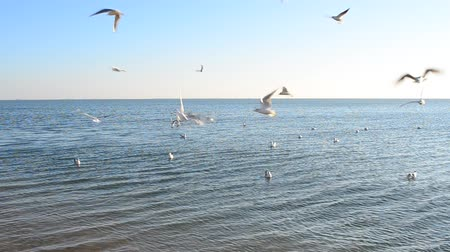 gaivota : lot of seagulls over the sea