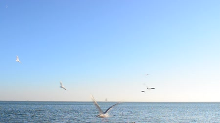 clareza : It is a lot of seagulls over the sea
