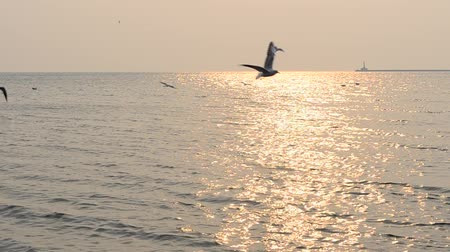 clareza : Sea and seagulls Stock Footage