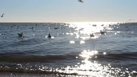 aves marinhas : Seagulls on water.