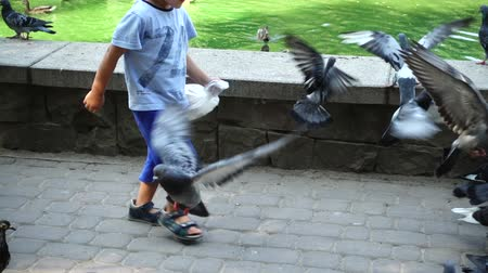 yeşilbaş : IVANO-FRANKIVSK, UKRAINE - AUGUST 21, 2018: The boy feeds pigeons in the park near the lake. Slow motion.