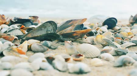 concha : Shells on sand. Shooting against the background of a wave.