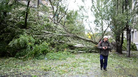 severe : BERDYANSK, UKRAINE - OCTOBER 10, 2015: Roots of the fallen trees. After a hurricane.