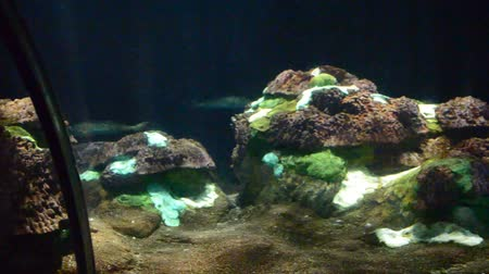 alga : Underwater world. a parks of mammals, oceanariums and animals.