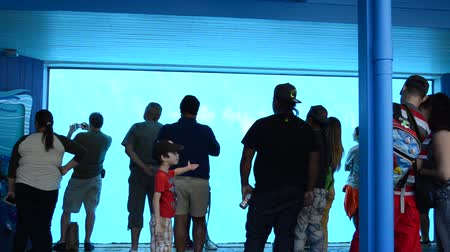 killer whale : ORLANDO, USA - MARCH 25, 2014: People through glass observe whales. SeaWorld is a parks of mammals, oceanariums and animals. Commersons Dolphin (Cephalorhynchus commersonii).