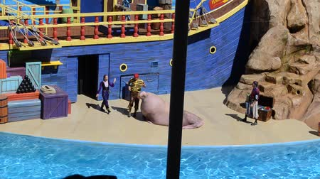 sea cow : ORLANDO, USA - MARCH 25, 2014: Sea cow on show. Listen to the trainer