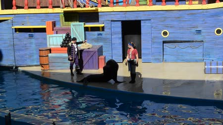 scheel : ORLANDO, USA - MARCH 25, 2014: Show of seals. Seals participate in show. SeaWorld is a parks of mammals, oceanariums and animals. California Sea Lion (Zalophus californianus)