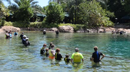 yüzgeçler : ORLANDO, USA - MARCH 25, 2014: Bathing with dolphins in the artificial lake. Discovery Cove, Orlando, USA. People study dolphins in a reservoir and float with them.