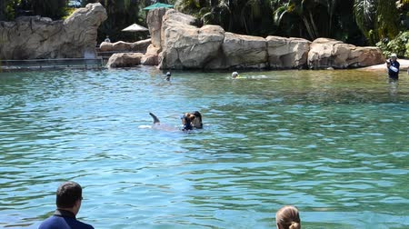delfín : ORLANDO, USA - MARCH 25, 2014: Bathing with dolphins in the artificial lake. Discovery Cove, Orlando, USA. People study dolphins in a reservoir and float with them.