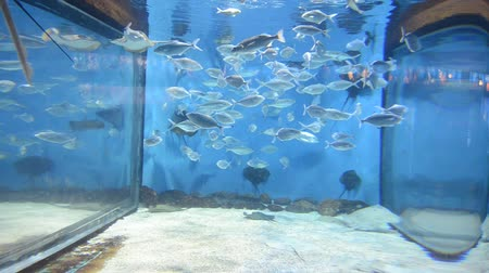 rekin : country Spain - Barcelona Aquarium Wideo